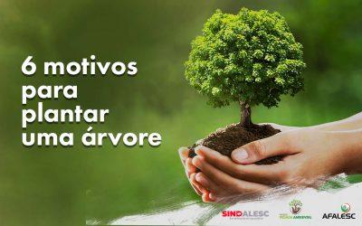 6 motivos para plantar uma árvore
