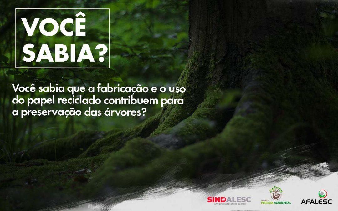 Você sabia que a fabricação e o uso do papel reciclado contribuem para a preservação das árvores?